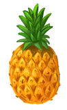 Picture of pineapple Royalty Free Stock Photo
