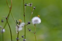 Pollen in the meadow Royalty Free Stock Photography