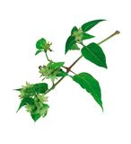 Picture of Plants stock images