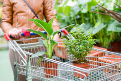 Picture of 2 pot plants standing in a shopping cart on supermarket background Royalty Free Stock Photos