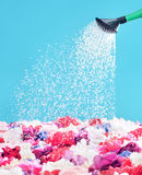 Picture presenting watering the colorful flowers Stock Photos