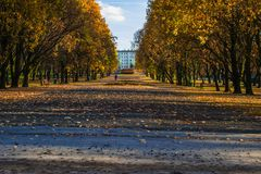 Silesian Park in Katowice. Parkway in autumn with gold trees. Stock Photography