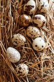 The picture quail eggs Stock Photography