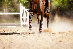 Picture of racehorse running at sand racetrack. Picture of chestnut racehorse running at sand racetrack during show jumping competitions Stock Image