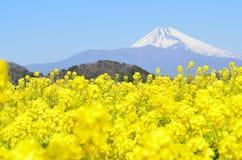 Rape blossoms and Mt  Fuji Stock Photo