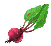 Picture of red beet Royalty Free Stock Images