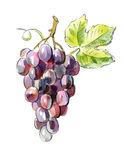 Picture of Red grapes Stock Image