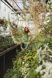 Picture of a redheaded girl looking through the plants. In glasshouse Stock Photography