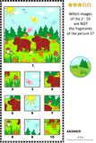 Picture riddle with two little brown bears - what does not belong?. Visual logic puzzle with two little brown bears in the forest: Which images of the 2 - 10 are Royalty Free Stock Photo