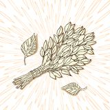 The picture for the Russian bath. Birch whisks for the sauna. Logo for the bath company. Place for your text. Hand. Drawing on the background of radial rays royalty free illustration