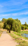 Picture the scene of willow and path at bank of pond. Picture the scene of willow and path at bank of pond royalty free stock photography