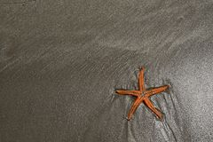 Sea star on a beach. Picture of Sea star on a beach and dark sandy royalty free stock photos