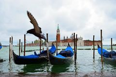 Pigeon and island San Giorgio Maggiore royalty free stock images