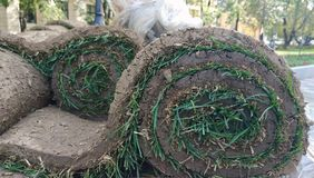 Photo of several rolls of lawn stock photography