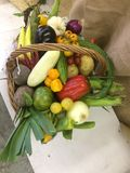 Basket with fresh vegetables royalty free stock images