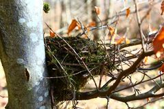 Birds nest in the forest. The picture shows a birds nest in the forest stock image
