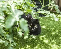 The garden - a black cat. The picture shows a black cat in the sun-lit garden stock image
