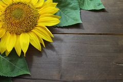 Border with a sunflower stock photography