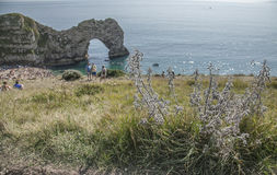 Durdle Door - the arch and the cliff. The picture shows Durdle Door - the meadows and the cliffs. There`s the limestone arch visible in the background Royalty Free Stock Photo