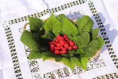 Raspberries in a basket. The picture shows fresh raspberries in a basket stock photo