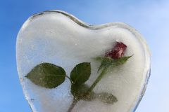 Ice heart and a rose in front of the blue sky stock photography