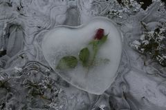 Ice heart with a rose on frozen water royalty free stock images