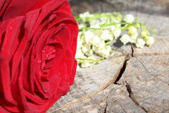 Red rose and lily of the valley on a weathered tree trunk stock photos