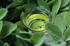 Sage tea in sage leaves stock photography