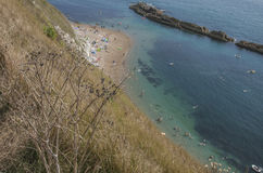 Plants, blue sea and people swimming - Durdle Door, Dorset, England. The picture shows some blue, shiny waters and some plants on the shore in Dorset, Durdle Royalty Free Stock Photos