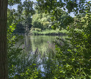 Hyde Park, bushes and the lake. Royalty Free Stock Image