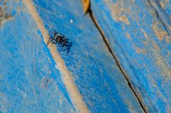 Spider in the deep blue royalty free stock photo