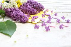 Spring flowers and hearts royalty free stock photo