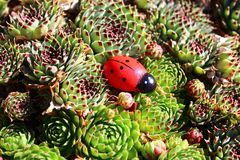Stone root with a wooden ladybird on a sunny day in the garden. The picture shows stone root with a wooden ladybird on a sunny day in the garden stock photos
