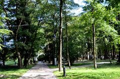 Street lights in a green park with tall trees. Stock Image