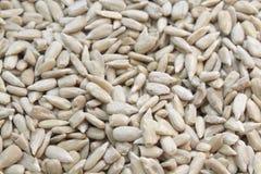 grain sunflower Stock Image