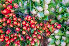Picture of small colorful tulips at the street Swedish market stock images