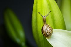 Picture of snail on the green leafs and flowers Stock Photos