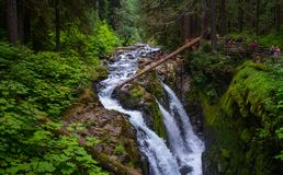 Waterfall with Rock and Moss  and tree at Sol Duc Fall. This is the picture of Sol Duc Fall Trail with rock, moss and tree at Olympic National Park Stock Photo