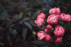 Pink flowers in a forest royalty free stock photos