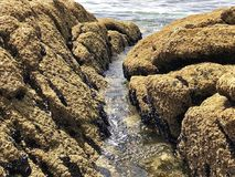 Rocks at the beach. Picture of some rocks and the water flowing among them stock photos