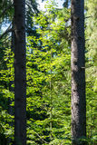 Picture of some trees in nature. Picture of some wonderful trees in nature Stock Photo