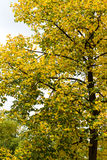 Picture of some trees in nature. Picture of some wonderful trees in nature Royalty Free Stock Images
