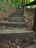 Stairs into the woods royalty free stock image