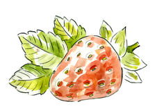 Picture of strawberry Stock Images