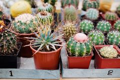 Collection of cactus. Picture of Succulent plants in the greenhouse stock image
