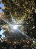 Sun gleaming through the fall trees Stock Photo