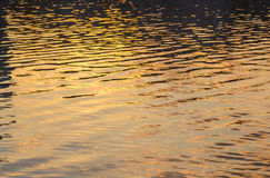 Picture of the surface water in sunset Royalty Free Stock Photo