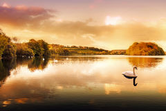 Swan Lake. Picture of a Swan on a Lake in the Scottish Highlands Royalty Free Stock Photo