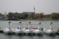Picture of Swan-shaped pedal boats on a lake ready for the day. stock photos