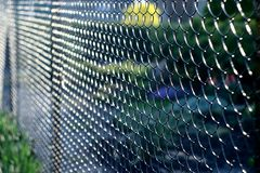 The grid the chain-link and its attractive texture. stock image